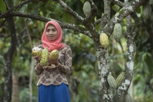 К 2025 году весь шоколад Mondelēz International будет производиться из какао, выращенного по программе Cocoa Life