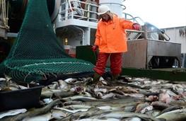 В украинские водоемы запустили десятки миллионов рыбы