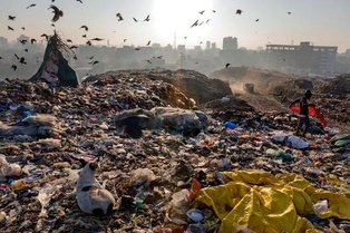 Гринпис: Coca-Cola засоряет всю планету