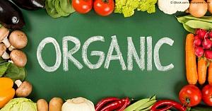 Украина экспортирует 90% органической продукции