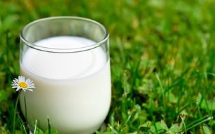 В Полтавской области открыли новый молокозавод мощностью 10 т в сутки