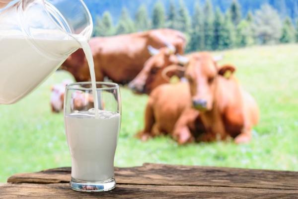 Мінагрополітики готує програму збільшення виробництва молока