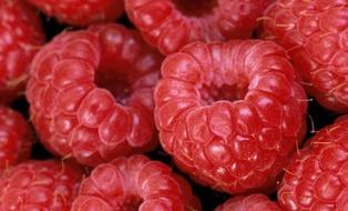 Экспорт украинской малины в ЕС за пять лет вырос в 52 раза