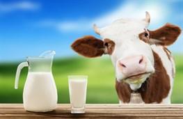 В Украине упало производство молока