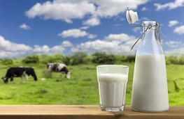 Украина в январе-ноябре сократила производство молока на 0,6%, поголовье КРС уменьшилось на 0,9%