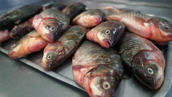 В Україні зросло виробництво риби